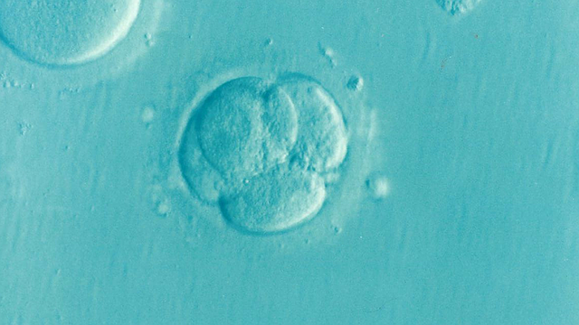 Human embryo donated to another couple